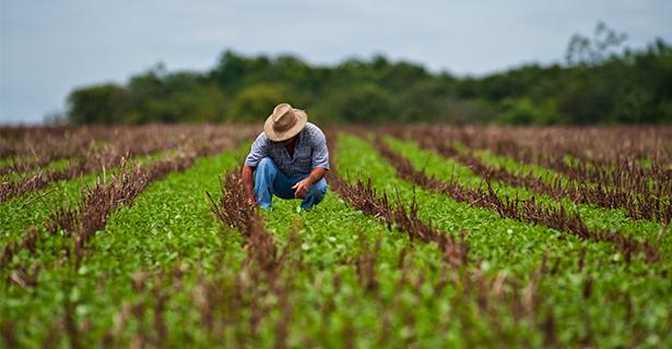agriculturabxc